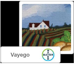 Vayego